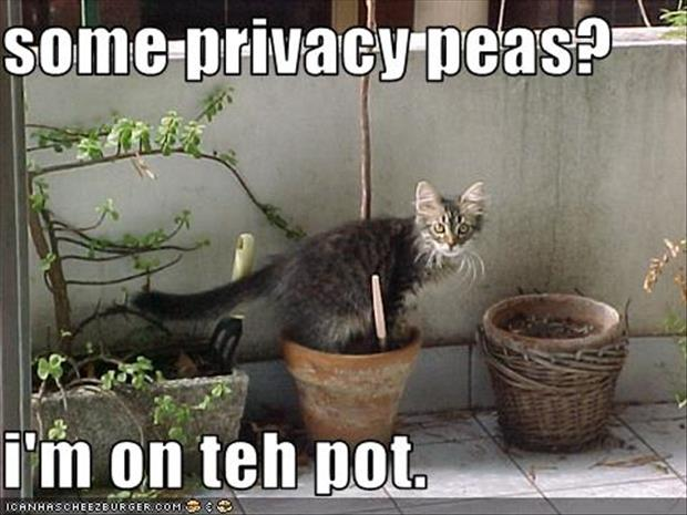 funny privacy pictures (4)