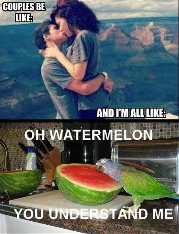 funny watermelon