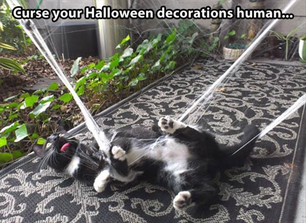 halloween decorations cats