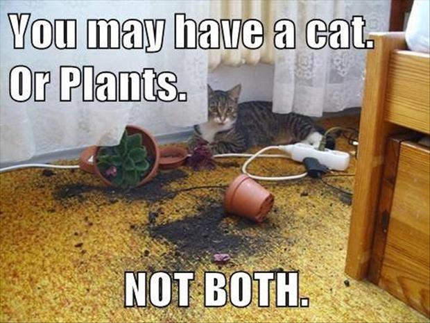 it's either the cat or the plants