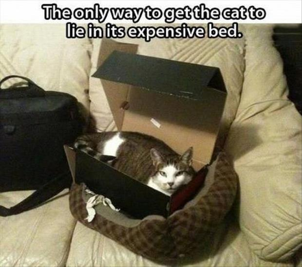 making the cat sleep in a box