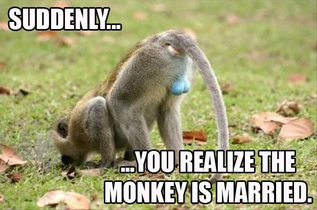 married monkey
