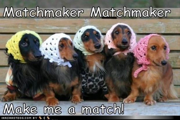match maker match maker make me a match dogs