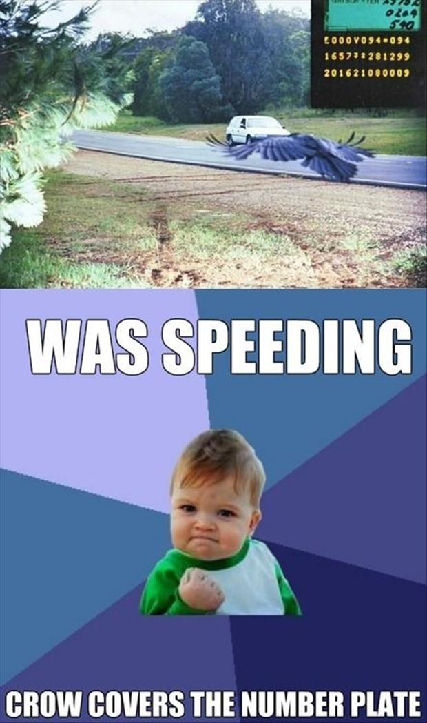 speeding ticket meme