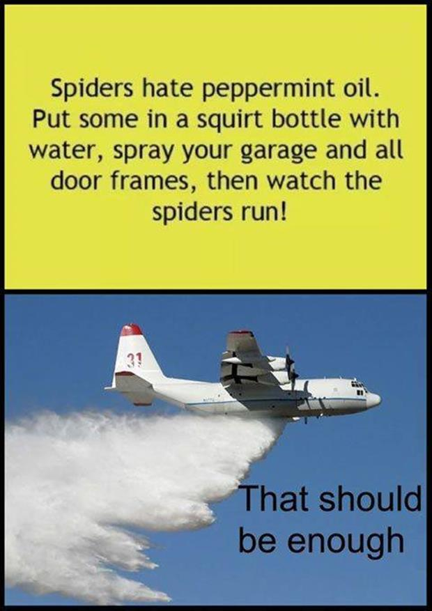 spiders hate pepermint oil