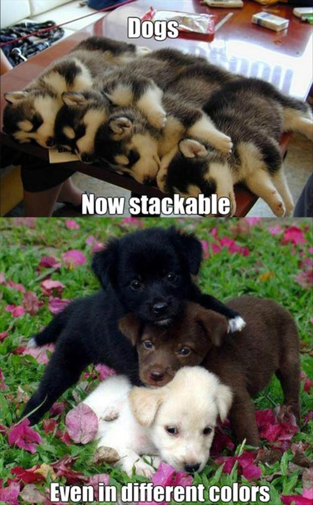 stackable dogs