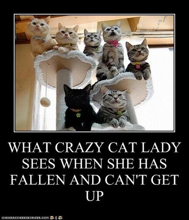 the crazy cat woman