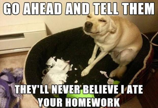 the dog ate your homework