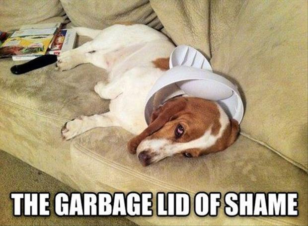 the garbage lid of shame