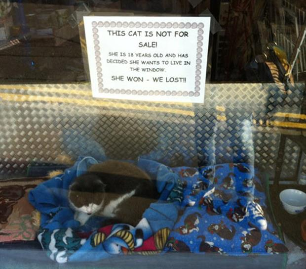 this cat is not for sale