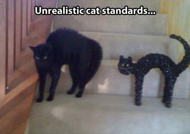 unrealistic cats