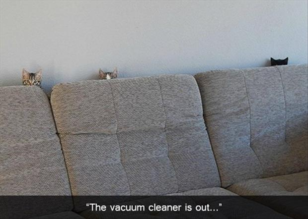 vacuum cleaner is out