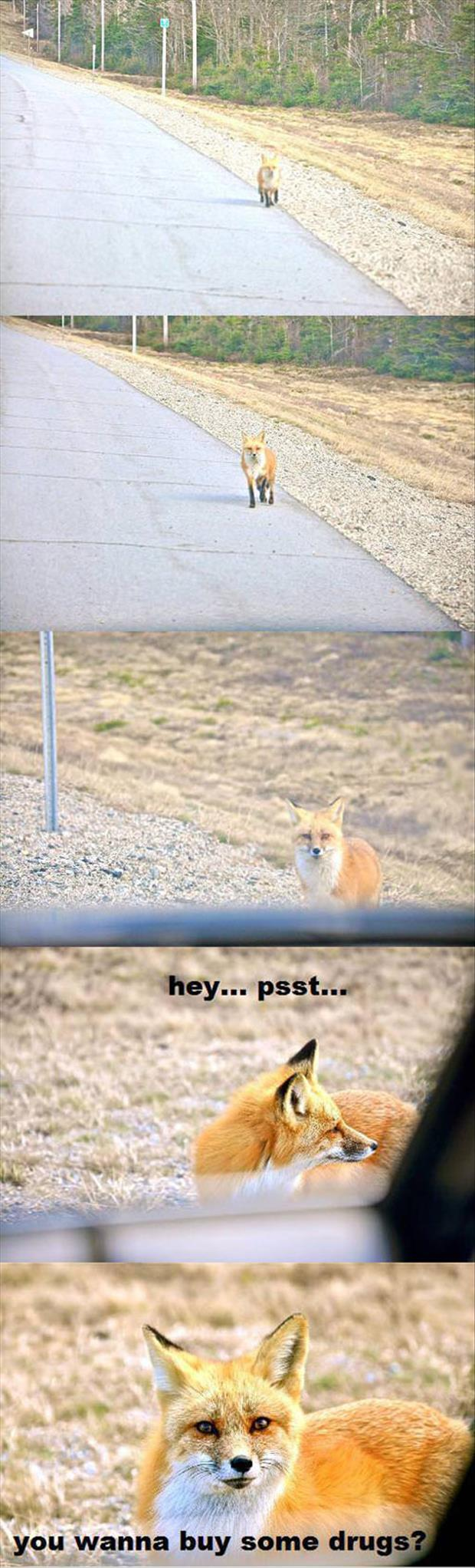 what the fox says