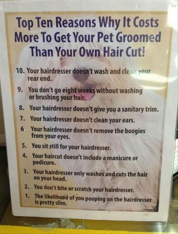 why it costs more to get your pets hair done