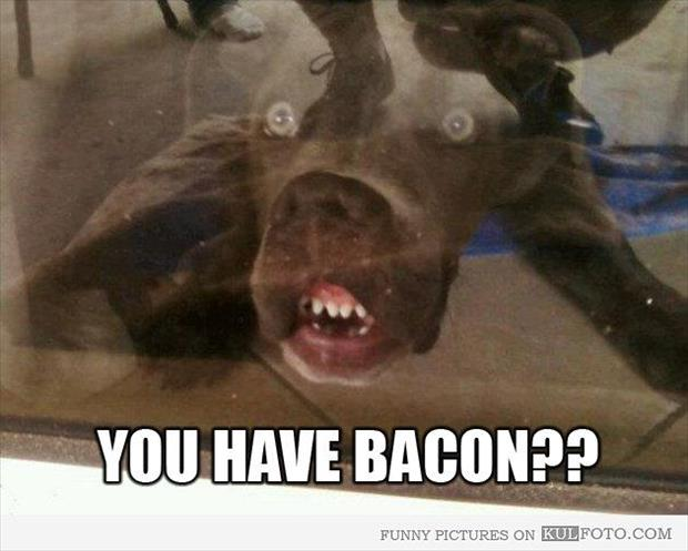 you have bacon