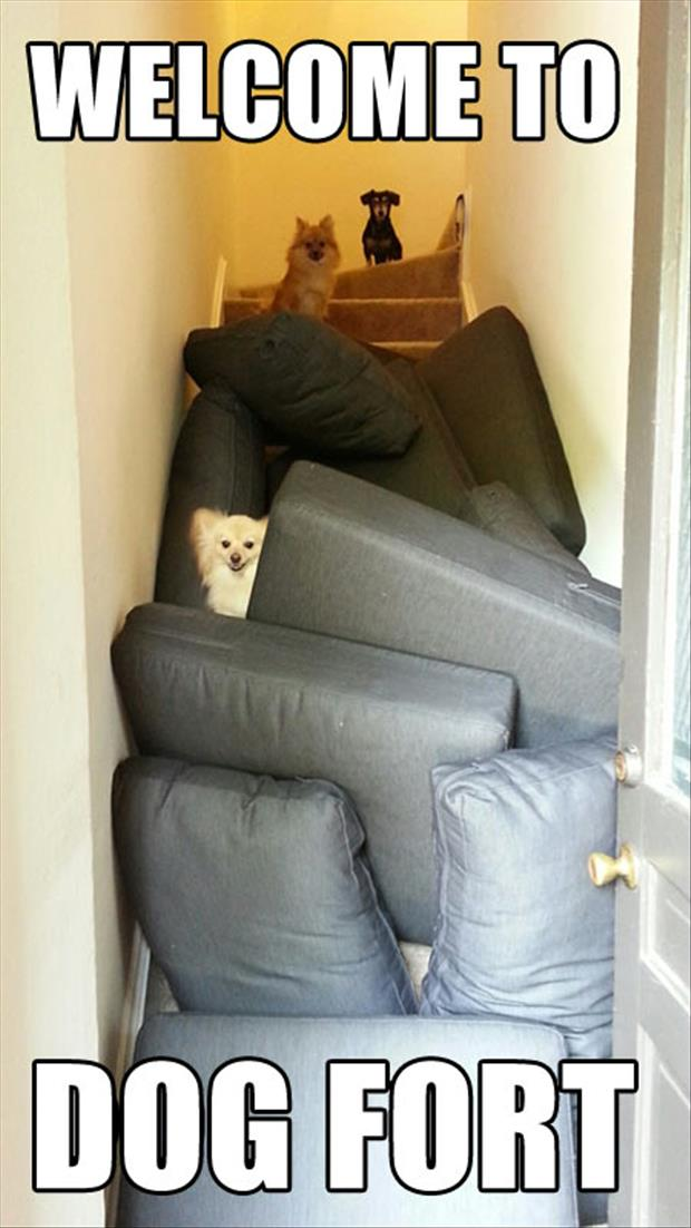 a dog fort