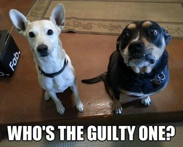 a dog is guilty
