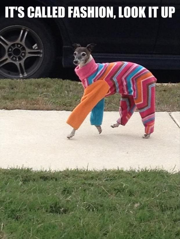 a fashion clothes for dogs