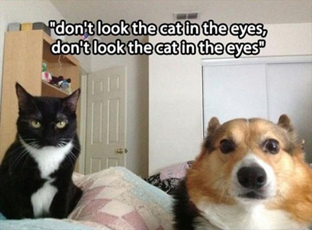 animal pictures humor (5)