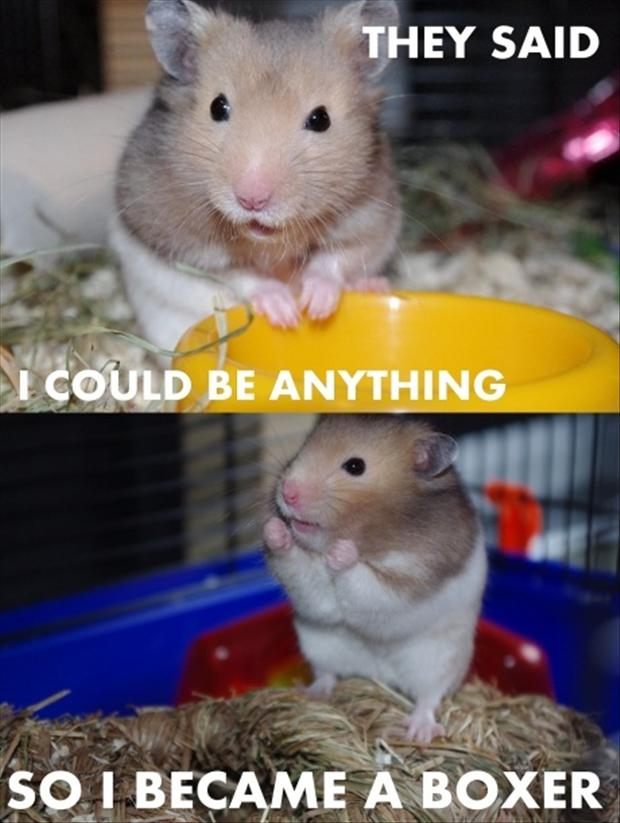 be anything (9)