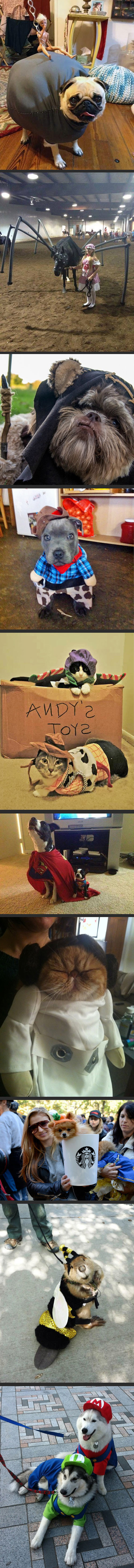 best pet costumes 1