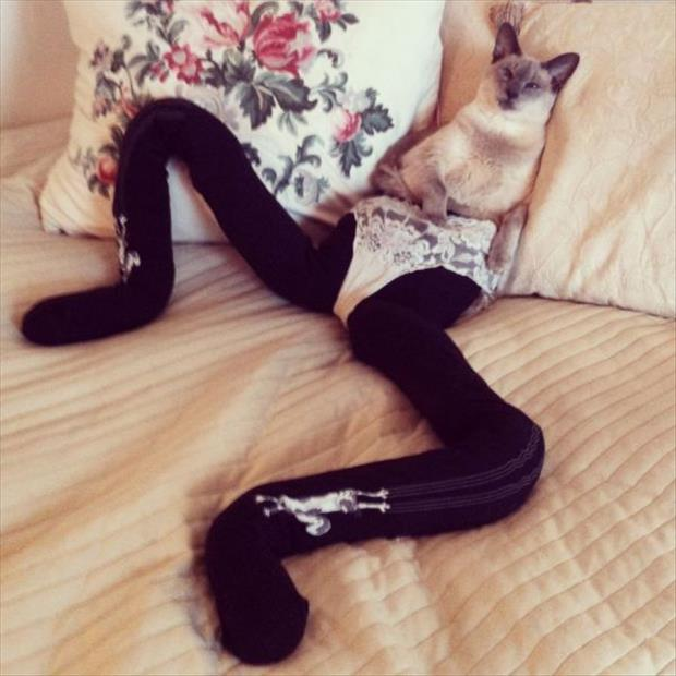 cats wearing tights (1)