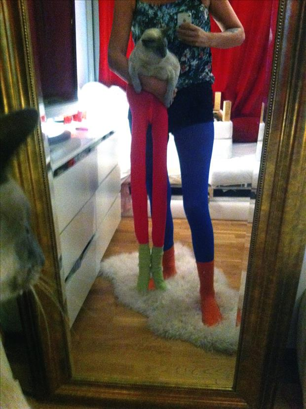 cats wearing tights (11)