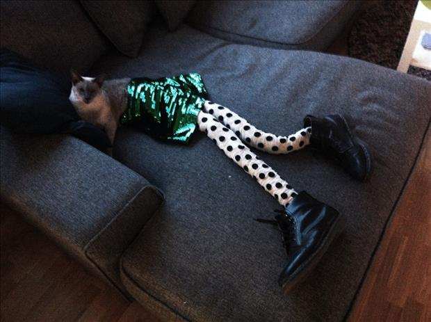 cats wearing tights (13)
