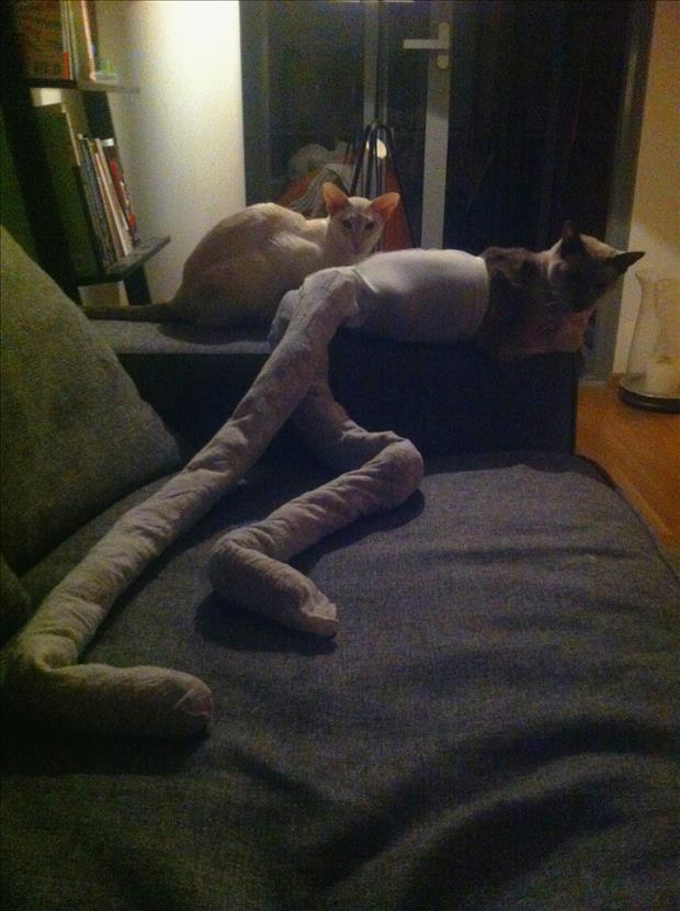 cats wearing tights (17)