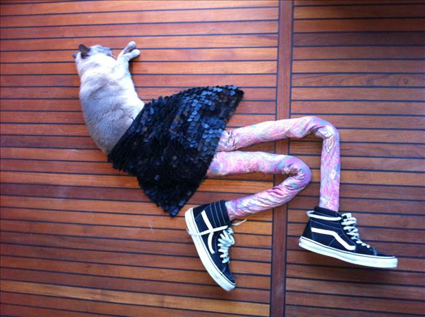 cats wearing tights (18)