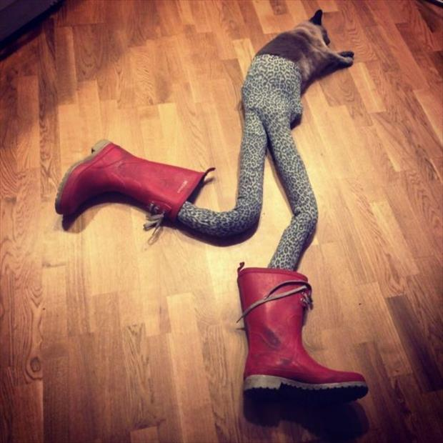 cats wearing tights (3)