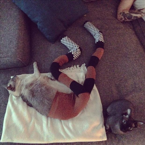 cats wearing tights (6)