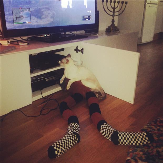 cats wearing tights (7)