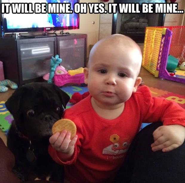 cute dog wants cookie
