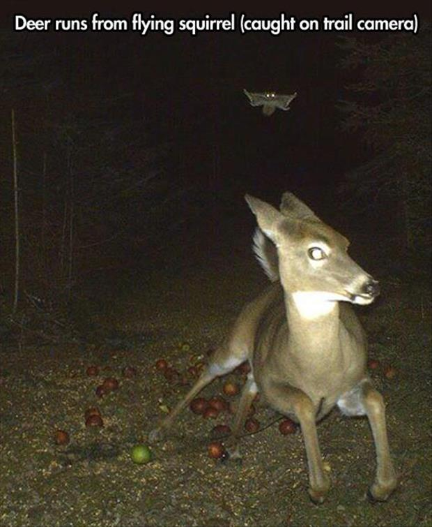 deer running from flyting squirrel