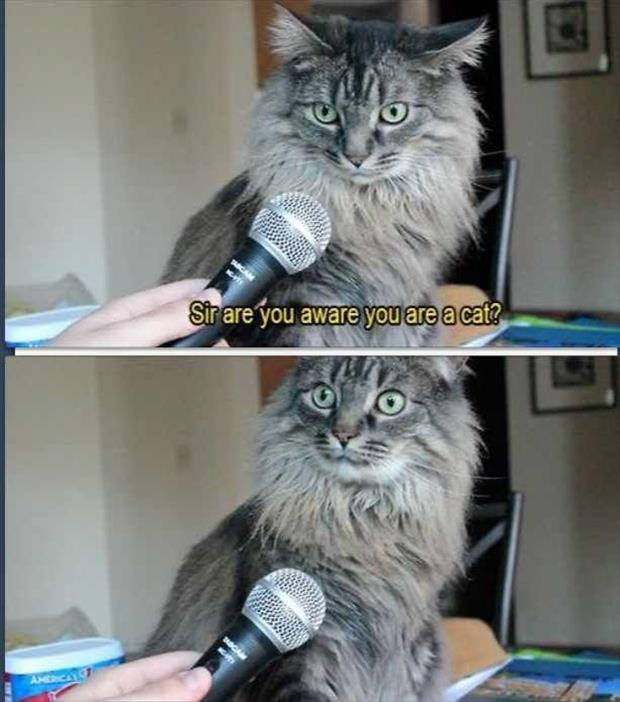 did you know you're a cat