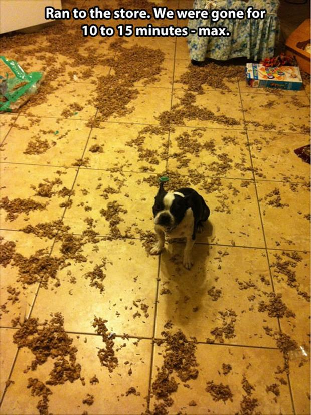 dog makes a mess