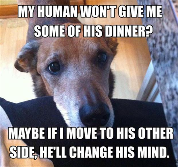 dog wants human dinner