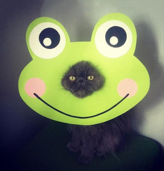frog cat face