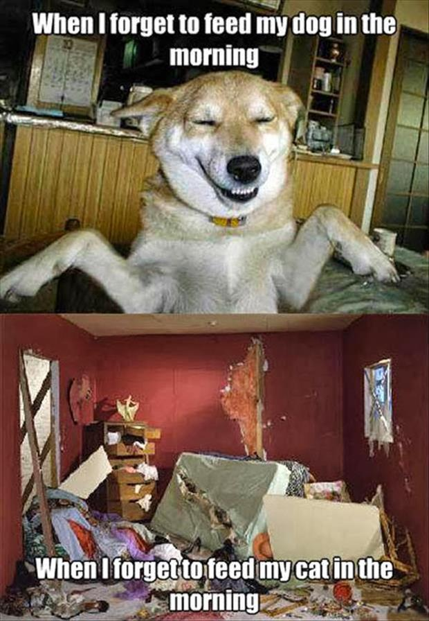 funny animals (15)