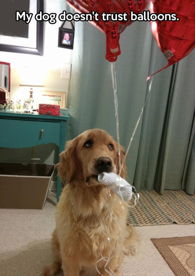 funny dog and balloons