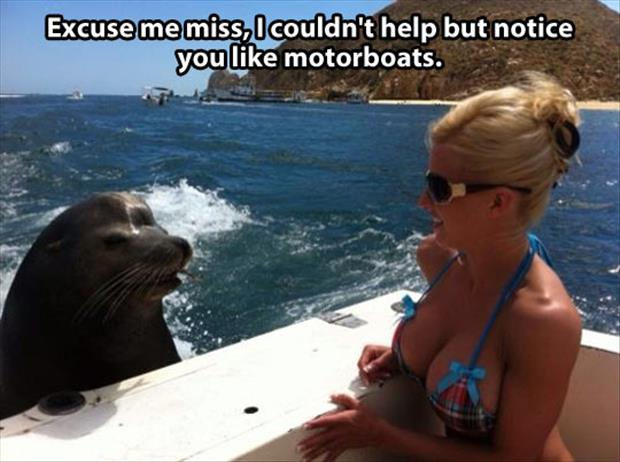 funny pictures (13)
