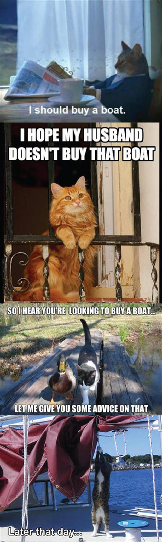 funny pictures (37)