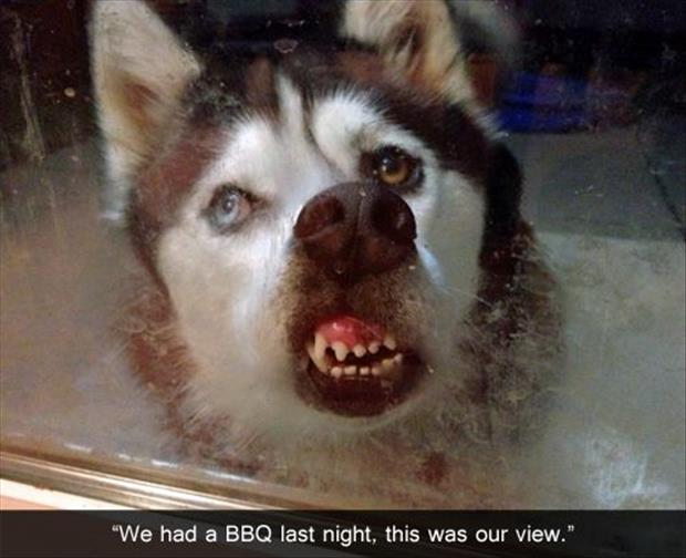funny pictures (47)