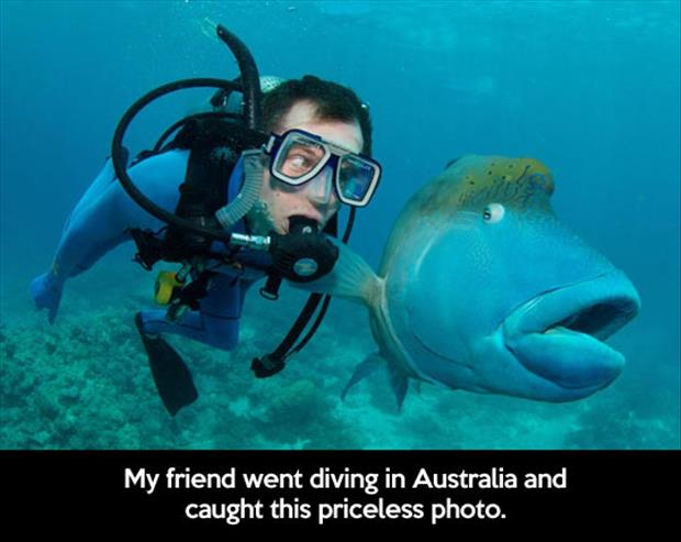 funny scubba diving pictures