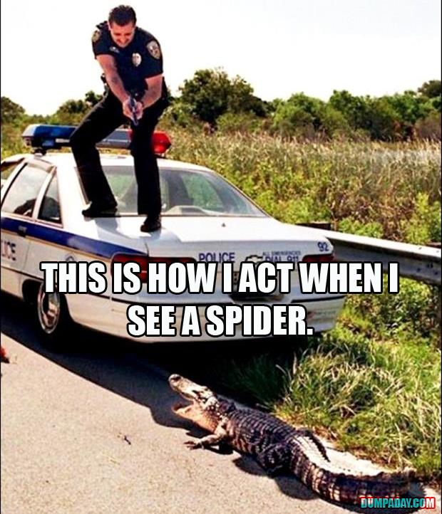 how I act when I see a spider