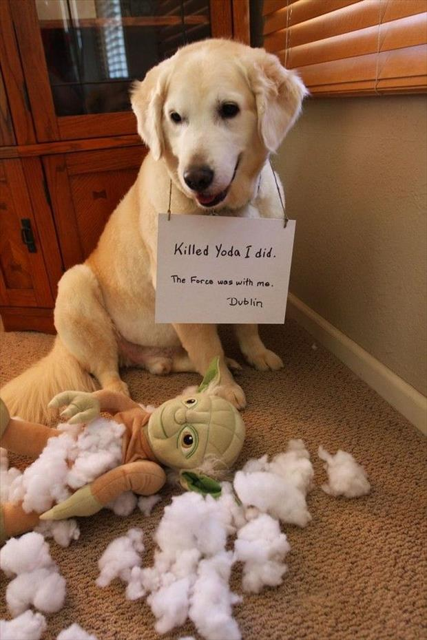 killed yoda dog shaming