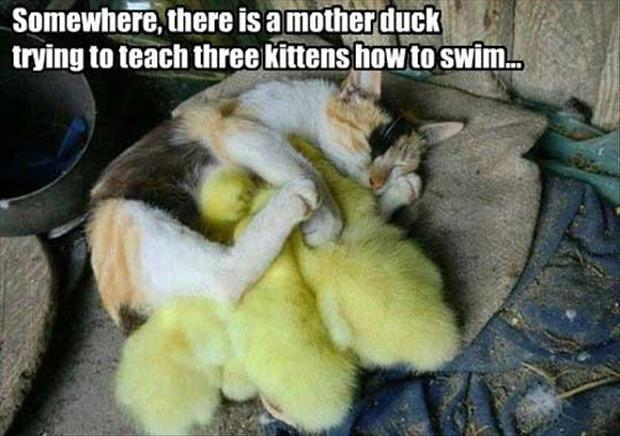 kittens and ducks