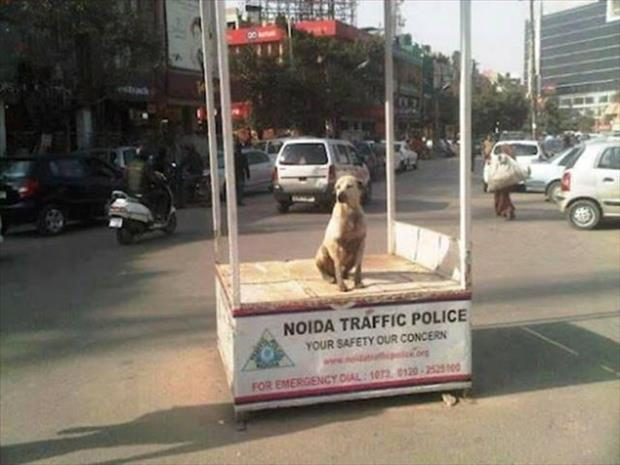 meanwhile in India (1)