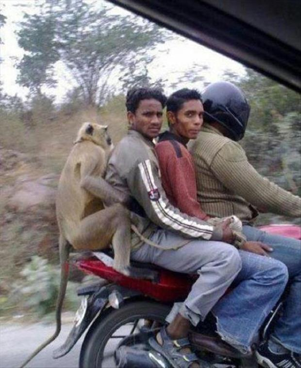 meanwhile in India (19)